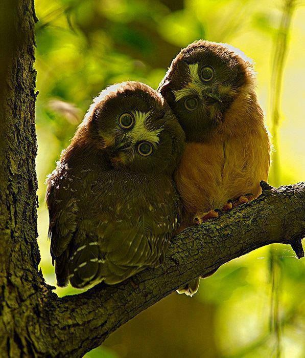 conversations dream owls
