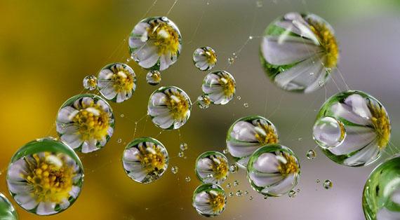 conversations luminous dew